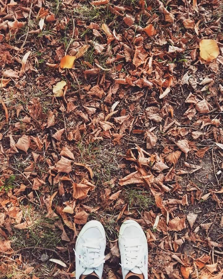 autumninto