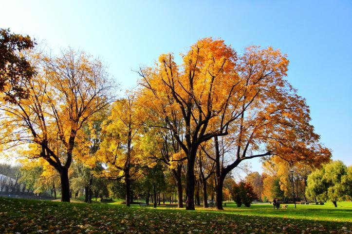 parco-pellerina-in-autunno-operazionefrittomisto
